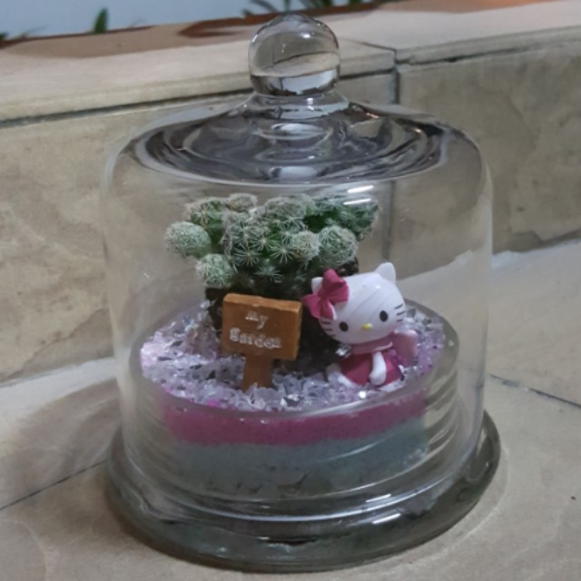 Terrarium Closed Jar Hello Kitty Live Plant Easy To Care For