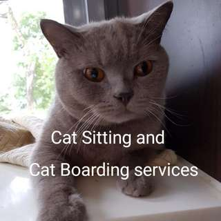 🐱🐺Cat boarding and Cat sitting services 🐱🐺