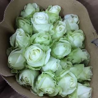 Instock ready affordable cheap budget Rose