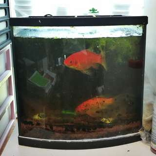 1 Foot Office Cube Tank for Sale - Cheap!