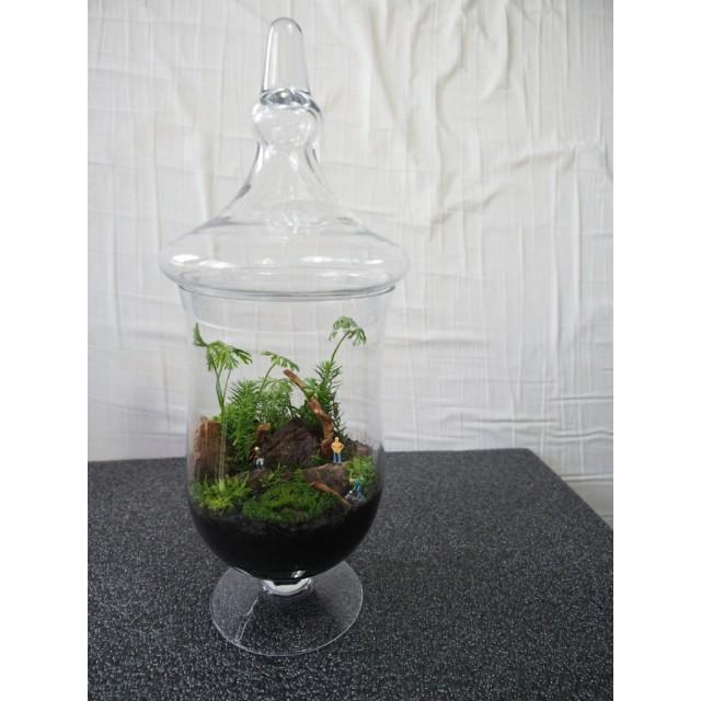 Glass Terrarium Jar Tall Gardening On Carousell