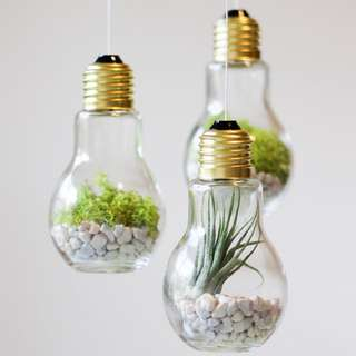 Handmade Lightbulb Airplant Moss Cactus Pebble Terrarium