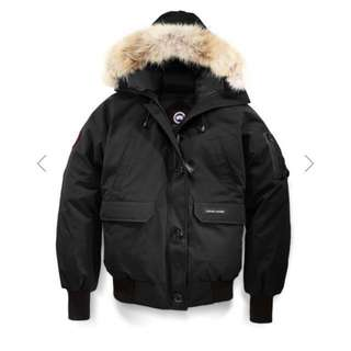 1 year old Canada Goose Chilliwack Bomber