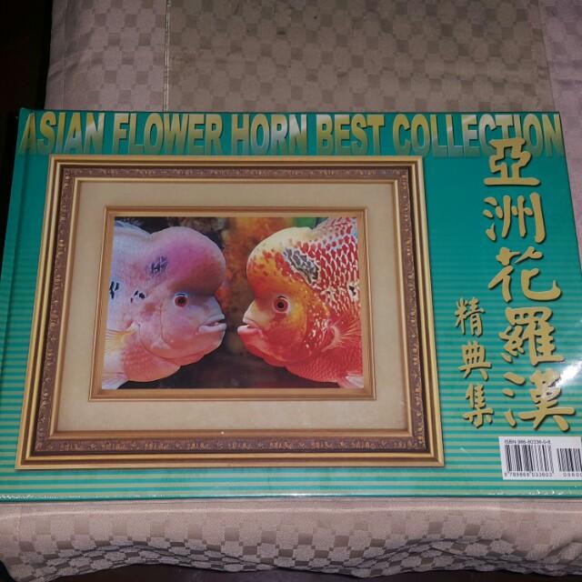 Asia flowerhorn best collection
