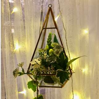 For Rent: Gold pyramid terrariums