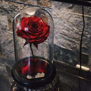 ENCHANTED ROSE: BELLE