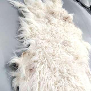 自然傷亡,蒙古國小羔羊全羊毛皮,色愣格省