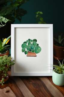 Pilea watercolour painting