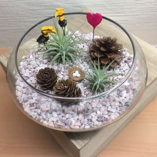 Christmas Airplant Terrarium