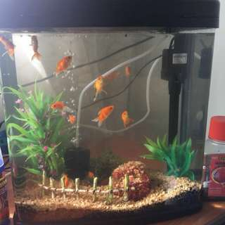 🚚 Complete aquarium set - fish tank with motor and filter. Price reduced