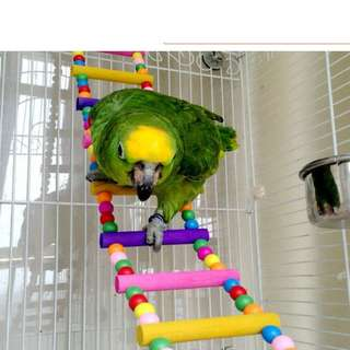 (Free normal mailing)  Colorful Beaded Parrot Ladder, Bridge and Perch