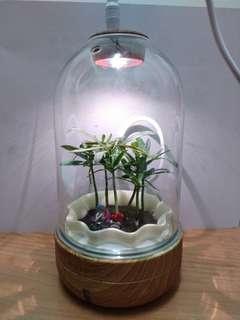 室內植物盆栽