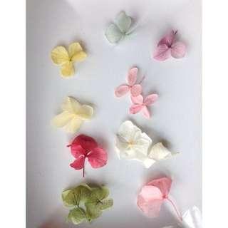 Dried Assorted Hydrangea Flower Petals