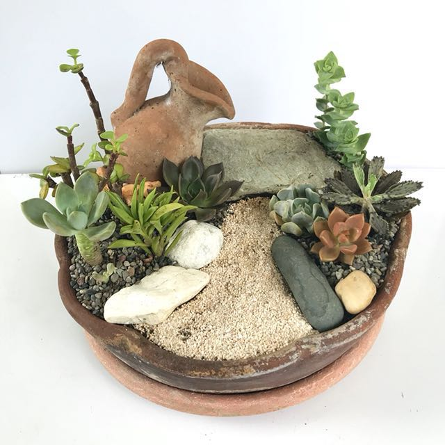 Dish garden cactus and succulents