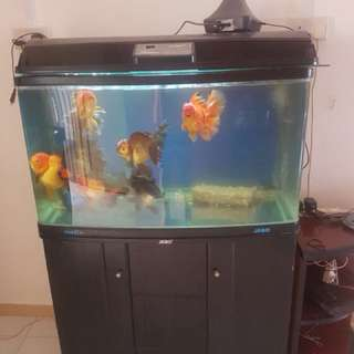 Fish tank with cabinet 3ft x 1.5ft