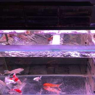 🚚 四尺標準魚缸