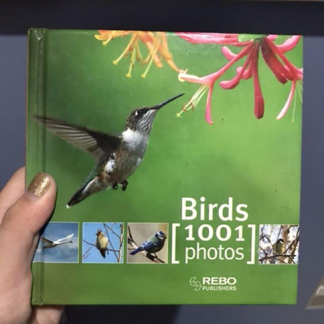 Birds 1001 photos