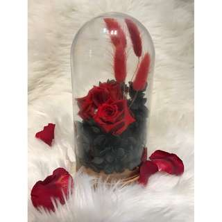 The Nightingale ( Preserved Red Roses )