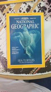 National geographic: sea turtles in a race for survival