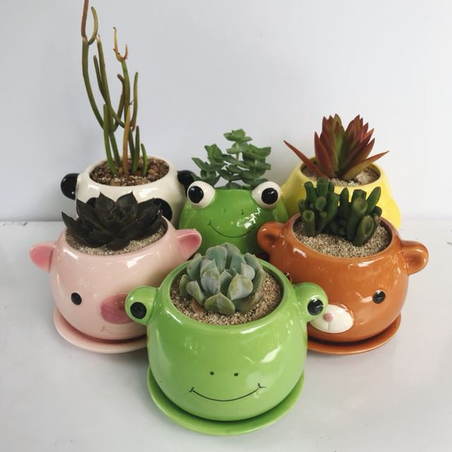 Cacti or succulent plants in cute animal pots