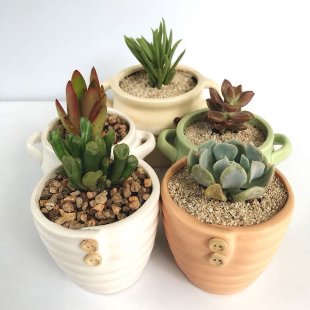 Cacti or succulents in glazed homey garden pots