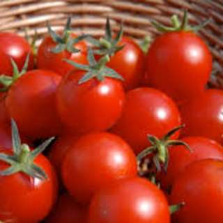 🚚 TOMATO RED ROCK Seeds