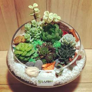 ❤️Perfect Gift for Father's Day/ Mother's Day/ Valentine's Day/ V Day/ Valentine/ Christmas/ Xmas/ Birthday/ Congratsr/ Farewell/ House warming/ Christmas/ Xmas - Real Plant Succulents/ Cactus Terrarium- LIMITED EDITION!