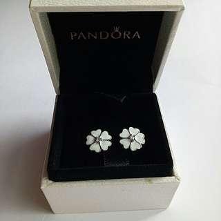 White Primrose Pandora stud earrings