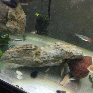 Gray rock for aquarium
