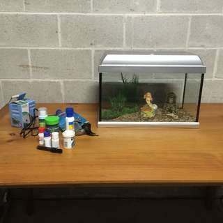 Fish tank including more