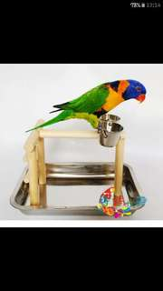 Perch , Metal Tray , Stairs, Double Clipper Food Bowl Small Playground For Birds Parrots Lovebirds Stand Toy Play Gym