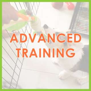 Advanced Training Class (6 Weeks) - US Certified, AVA-Accredited Force-Free Dog Training by Pawrus Dog Training Academy