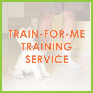 Train-For-Me Training Service - US Certified, AVA-Accredited Force-Free Dog Training by Pawrus Dog Training Academy