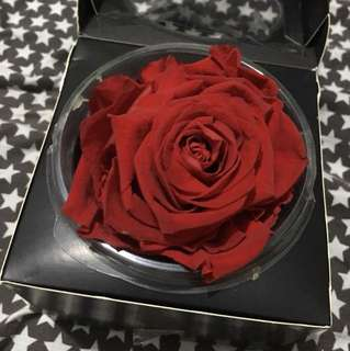 Large Kiara Infinity Rose