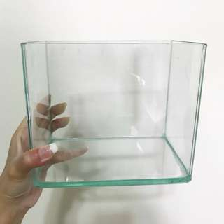 Glass Fish Tank (Small) Curve front