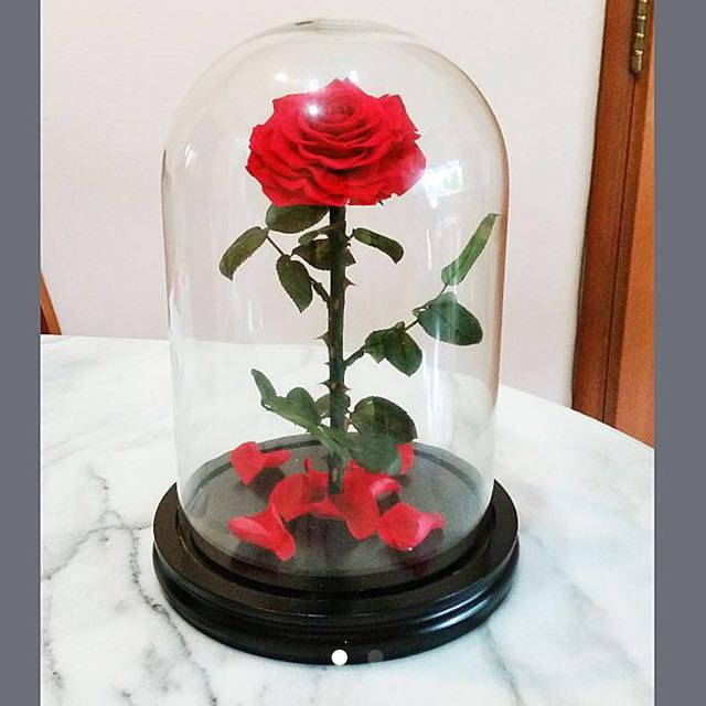 Beauty And The Beast Wedding Gift Birthday Gift Preserved Rose