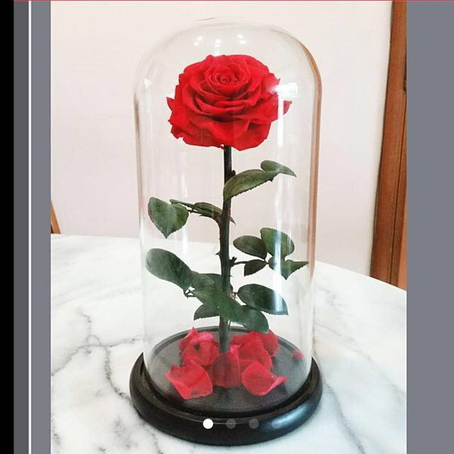 Preserved Rose Anniversary Gift Present Birthday Girlfriend Valentine Day Design Craft Handmade On Carousell