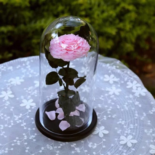 Preserved rose glass dome birthday gift girlfriend gift wedding preserved rose glass dome birthday gift girlfriend gift wedding proposal gift preserved flower engagement design craft handmade craft on carousell negle Images