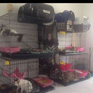 Servis jagaan kucing cat hotel kitten boarding