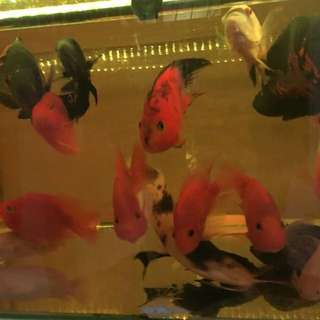 cheap fishes for sale