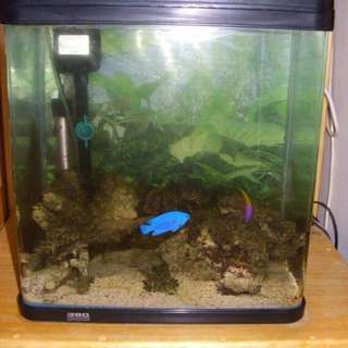 Aquarium for sale 3500php only