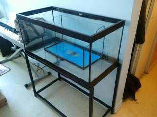 40 Gallon Breeder Aquarium + Stand