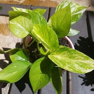 Plants Indoor or outdoor