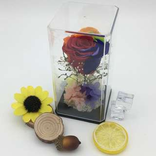 Real preserved rainbow rose in acrylic box