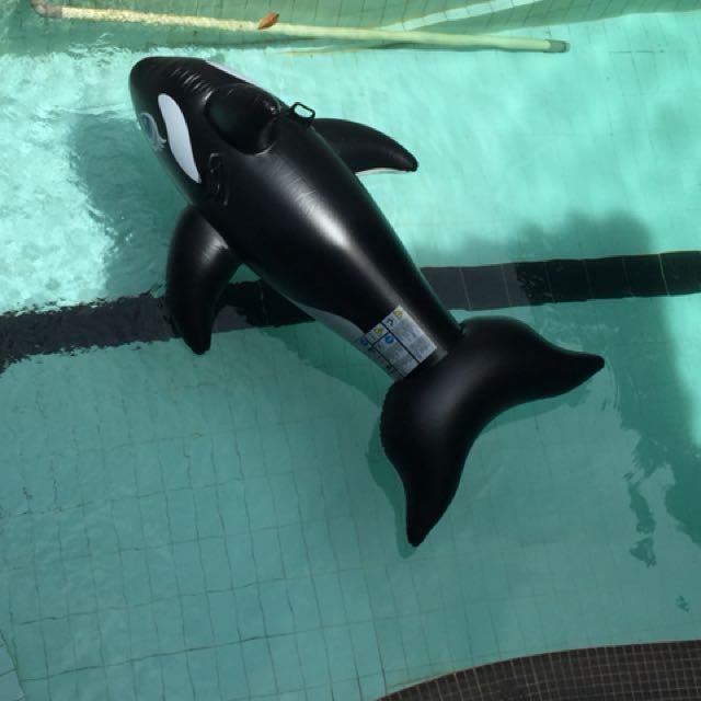 Pelampung dolphin utk berenang