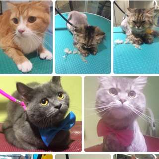 Cat grooming WITH FREE SPA!!!!!!(home based avail too)