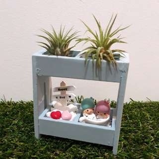 Little Twin Stars Valentine's Day Air Plant