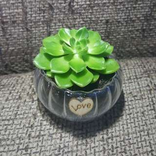 Succulent with Love