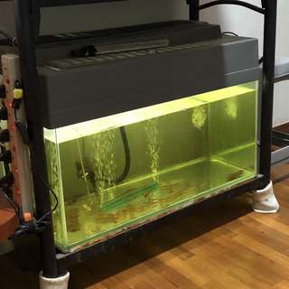 2.5' Fish Tank, Stand & Accessories