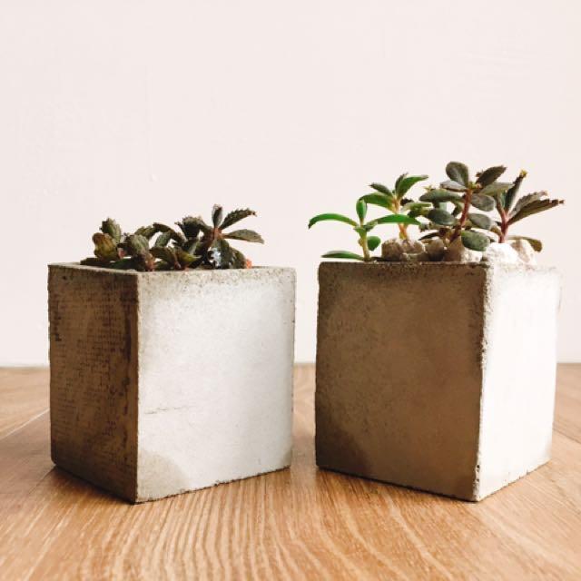 水泥 方盆 花盆 裝飾 盆栽